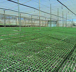 substrato-propagação-hortícola