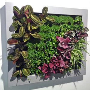 Jardim vertical de interior slimgreenwall projar for Modulo jardin vertical