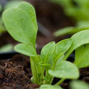 substrato-agricultura-ecolóica