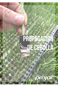 semillero-cebolla
