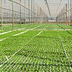substratos_profissionais_sementeiros